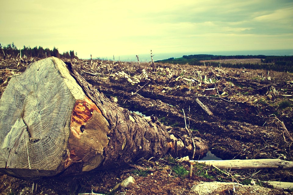foret-deforestation